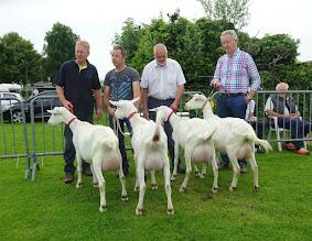 Photo: Klasse 2: 1 jarige witte geiten. 1a. Joke 52; 1b. Malinda; 1c. Joke 50; 1d. Doortje.