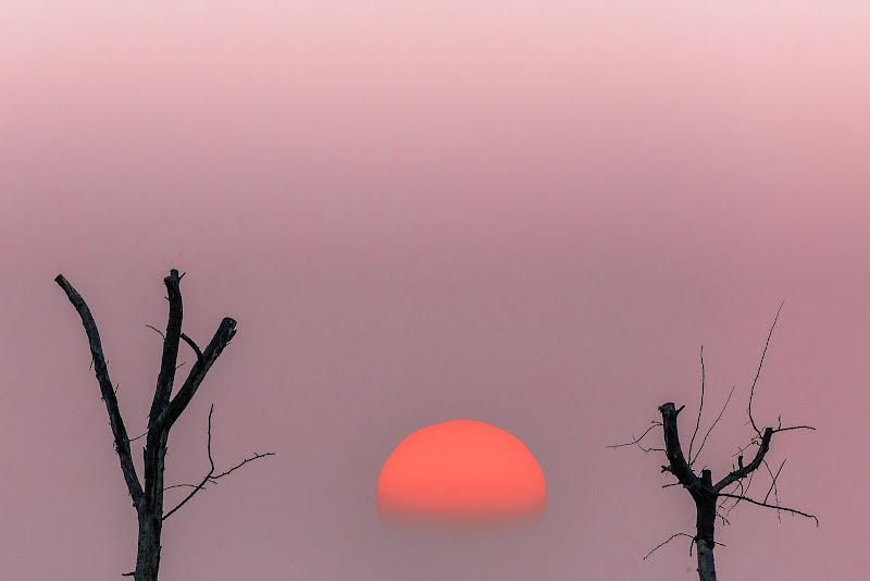 A tramontar tra rami... di prometeo