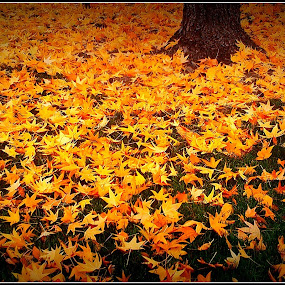 Autumn is a second spring by Awesome Pics - Nature Up Close Leaves & Grasses ( moods, colorful, folliage, happiness, leaf, vibrant, leaves, fall leaves on ground, fall leaves, inspiration, nature, autumn, january, emotions, fall, abscission, mood factory )