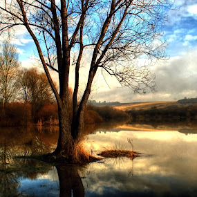 jar na jazere by Ján Hrmo - Landscapes Waterscapes ( strom, slnko, jazero, obloha, kriky, oblaky, voda )