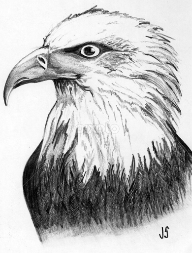 Eagle Feather Pencil Drawing By jennifer storch - drawingEagle Feather Pencil Drawing