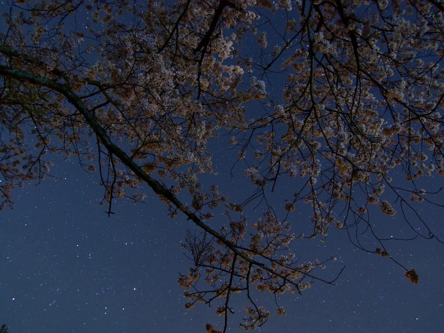 Sakura and Stars