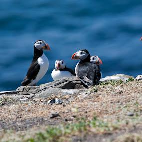 by Andrew Richards - Animals Birds