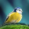 com.antiopa.oiseauenpoche