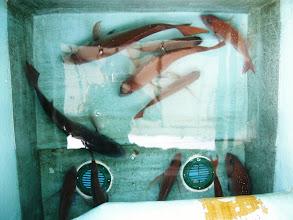 Photo: タムラさんもがんばって釣ってます。