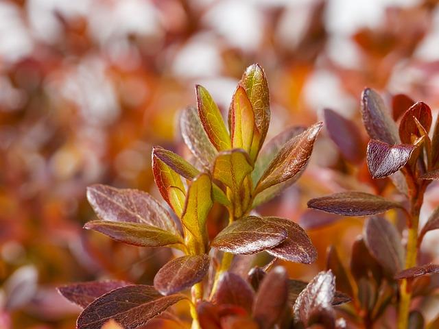 fall-colors-1796151_640.jpg