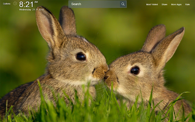 Cute Bunny Rabbit Wallpapers Theme New Tab
