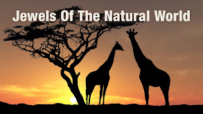 Jewels of the Natural World thumbnail