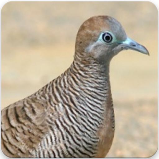 App Insights: Zebra Dove Call: Zebra Dove Sound, Zebra Dove