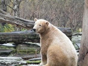 Photo: Knut nimmt lieber auf der Anlage Platz ;-)