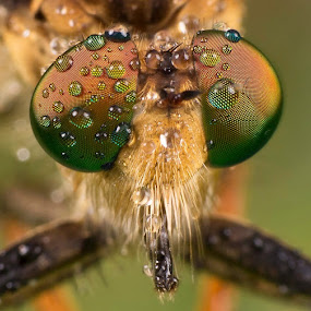Still Fresh... by Vincent Sinaga - Animals Insects & Spiders