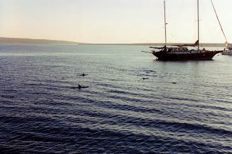 Photo: #006-Dauphins