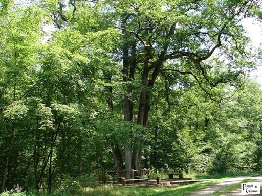 sentier écologique des 6 frères arbres remarquable à 6 souches