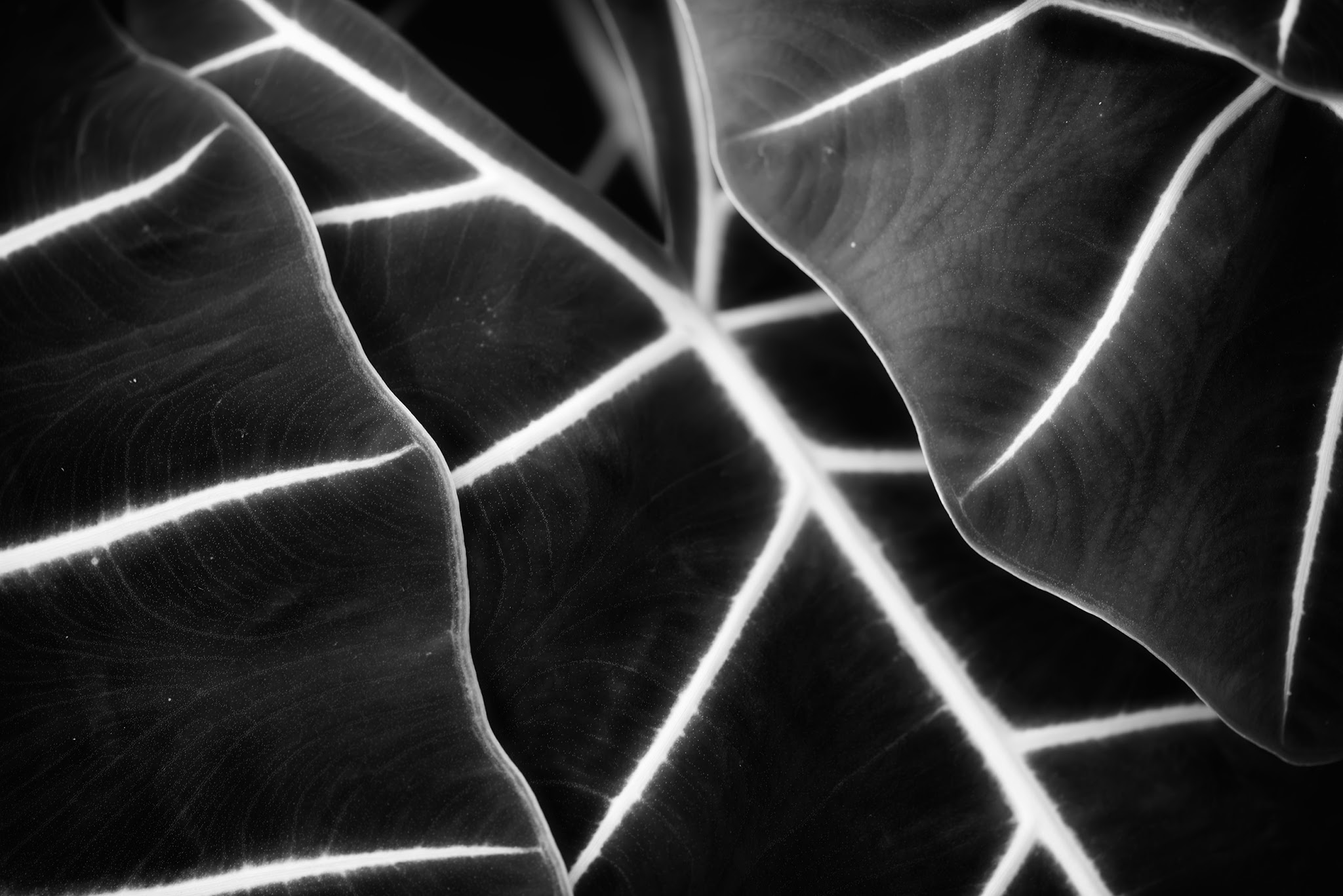"""Photo: Layered depths  My last """"abstract"""" shot for a bit (until I shoot more) ;)  #abstract  #Japan  #Tokyo  #flora  #BlackandWhite"""