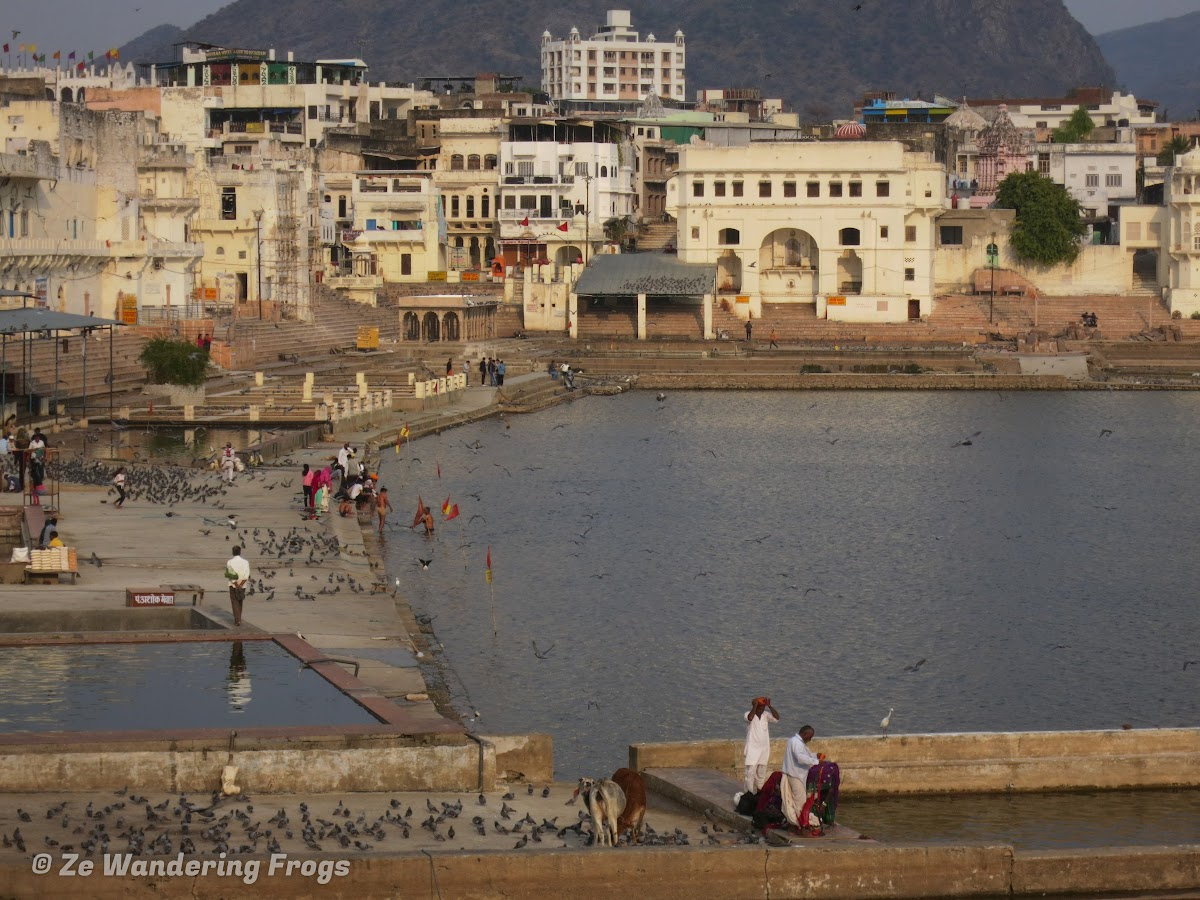 India. Rajasthan Pushkar . Morning bath rituals in Pushkar Lake