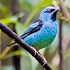 South American Birds Free