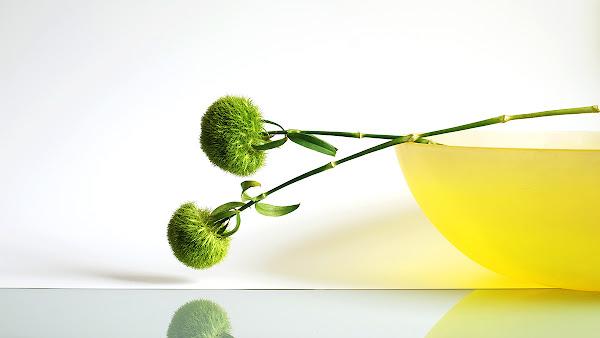 <p> Green Trick</p>
