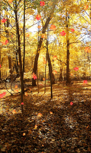 Autumn Wallpaper cheat hacks