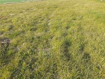 terrain à Wormhout (59)