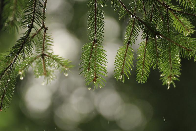 il verde di pino di gatta66