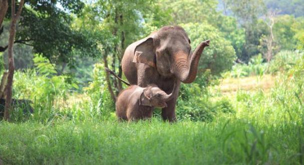 Santuário Elefantes