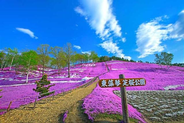 北海道東藻琴芝櫻公園 日本旅行手冊