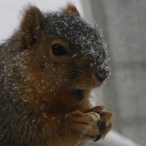 shocked squirrel by Logan Williams - Animals Other Mammals