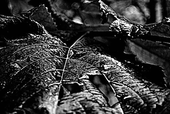 PLATED LEAF RAIN di Francesca Demichei