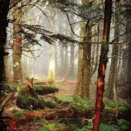 by John Ireland - Landscapes Forests