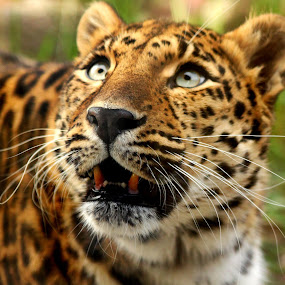 Curious Katerina by Amanda Westerlund - Animals Other Mammals