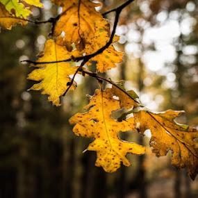 by Manash Kaushik - Nature Up Close Leaves & Grasses