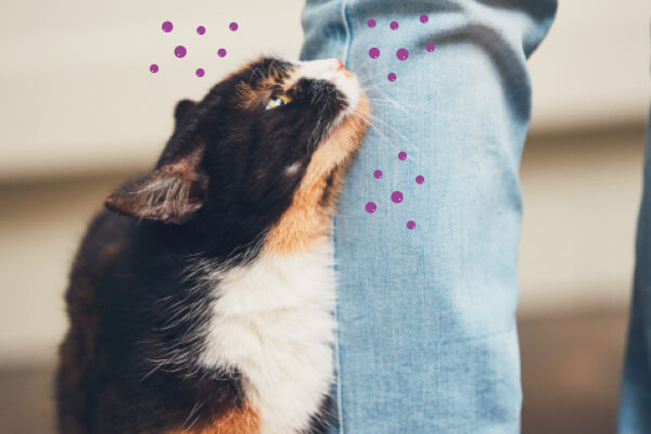 Kat markeert zijn baas met kopjesferomonen