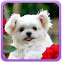 Cute Puppies Gallery icon