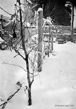Photo: Apple trees along the fence in the snow.  4x5 field camera, pre-flashed paper negative (Ilford VC), heavily cropped, lots of swing, yellow filter.  4sec, f/11