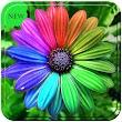 Flower gif icon