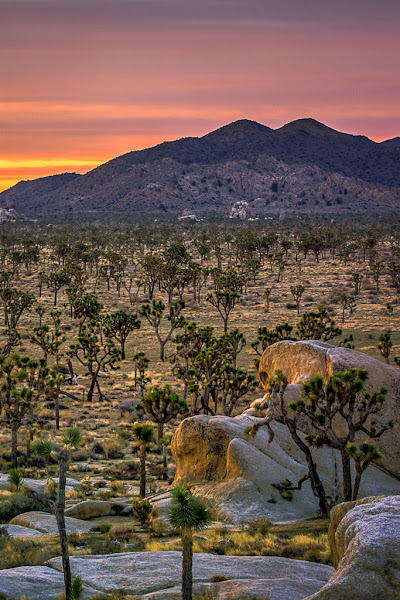 Photo: Sunrise in Joshua Tree National Park, California.  I didn't like original version s of this photo, but using the latest version of Photomatix with the direct interface to Adobe Lightroom for pre and post processing, it turns out pretty well.  As i work out the final layout this week, I may use a shot like this as the Joshua Tree chapter header image for my upcoming guidebook to Southern California landscape photography.