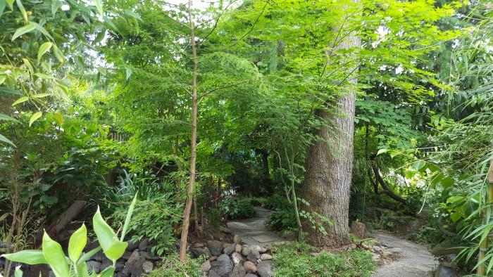 Photo: Woodland walk at the Widuschek Garden.