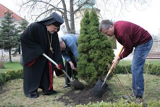 Photo: Завершення садіння дерева