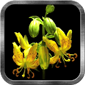 Flower Bud Live Wallpaper icon