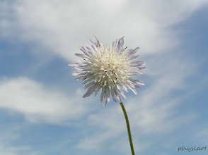 Photo: flower-sun
