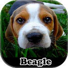 Meu Beagle icon
