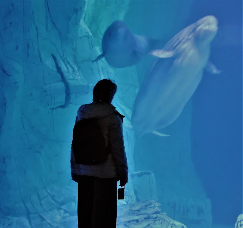 Incontro con beluga di Lory67