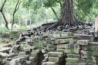 Photo: Year 2 Day 44 -   Tree  in the Archaeological Park