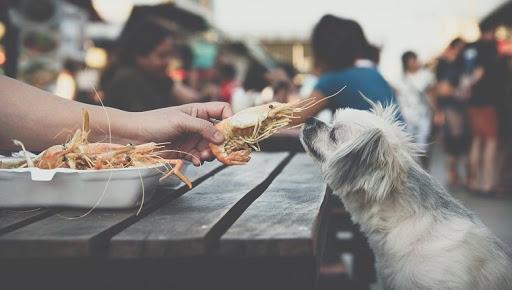 Can Dogs Eat Shrimp? Is Shrimp Safe For Dogs?