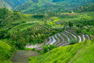 Antique Rice Terraces