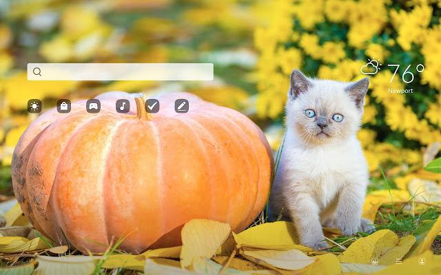 Cats & Pumpkins HD Wallpapers New Tab