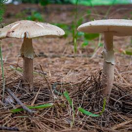 by Dave Martin - Nature Up Close Mushrooms & Fungi