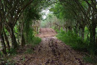 Photo: Wild tortoise ranch road