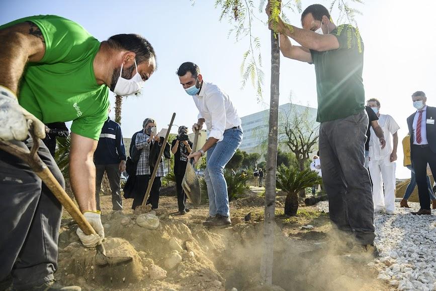 El Hospital Torrecárdenas mejora su entorno con 200 árboles y 13.000 plantas.