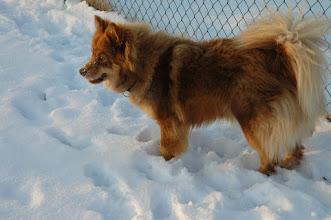 Photo: Smukke Kiira en vinterdag